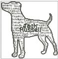 Jack Russell In Words